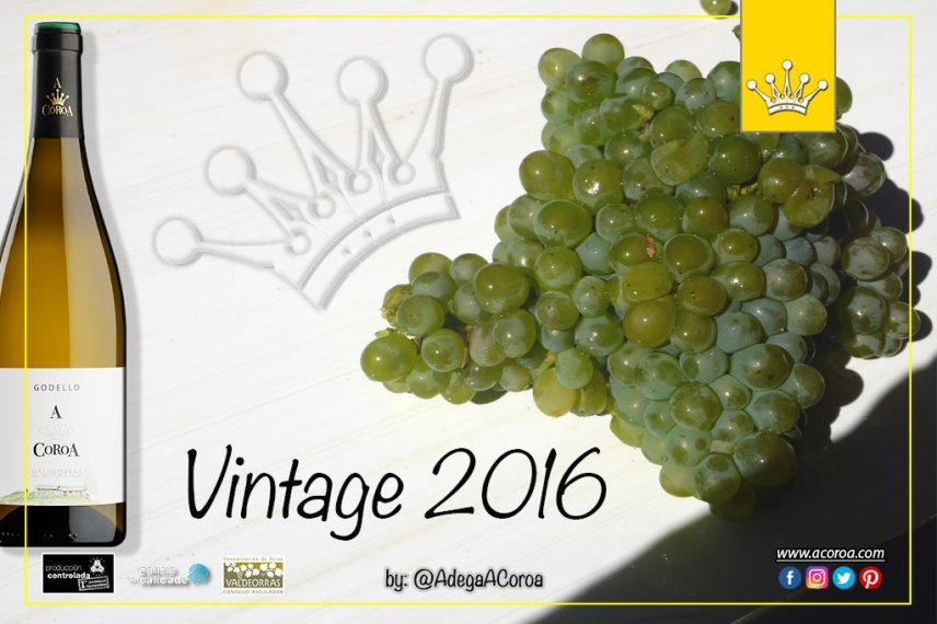 The 2016 harvest of Godello A Coroa is ready to be launched to the market