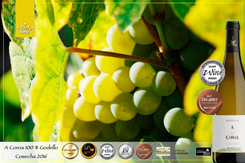 Two new medals for our wine 100% Godello A Coroa 2016