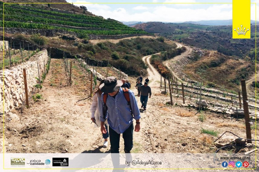 US Specialists of the wine sector visit the 2017 harvest at Adega A Coroa