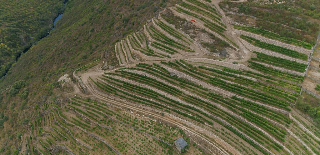 GODELLO, A COROA, VALDEORRAS, 200 CESTOS, SPAIN, WINE,