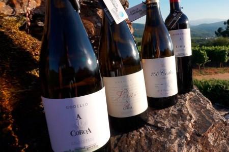 Gama de vinos A Coroa