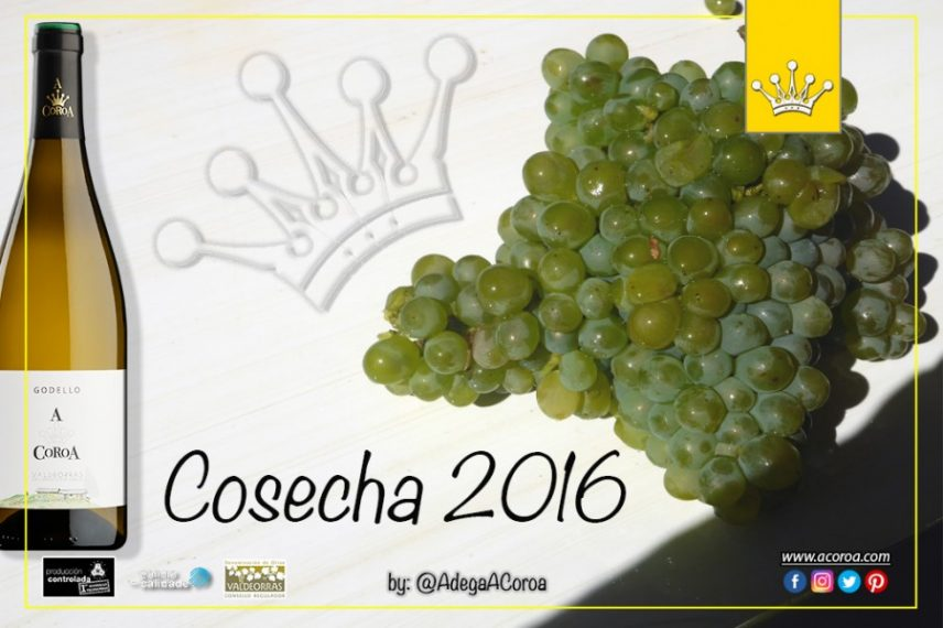 La cosecha 2016 de Godello A Coroa a punto de llegar al mercado