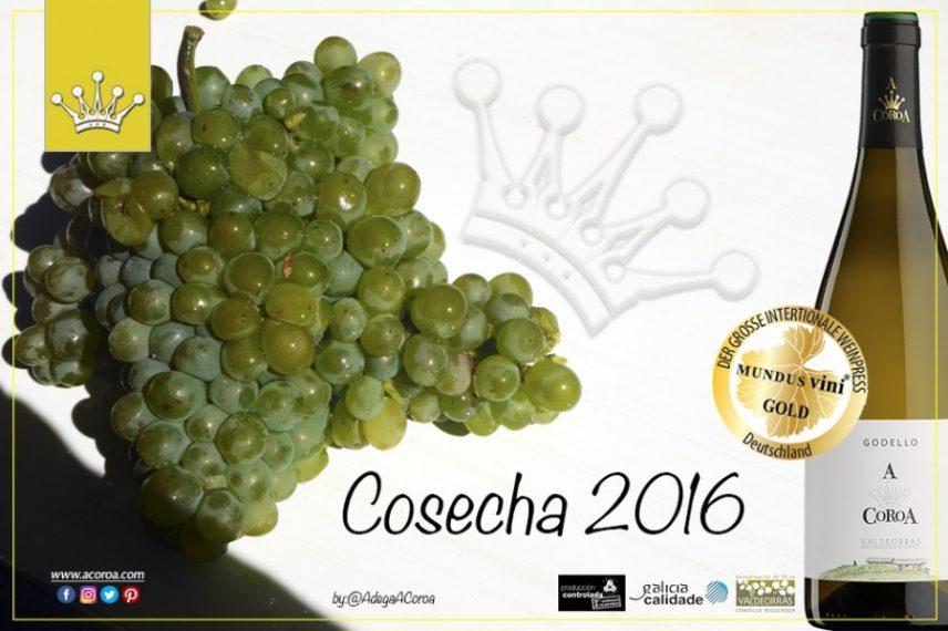 La Gama A Coroa 100 % Godello 2016 ya está en el mercado